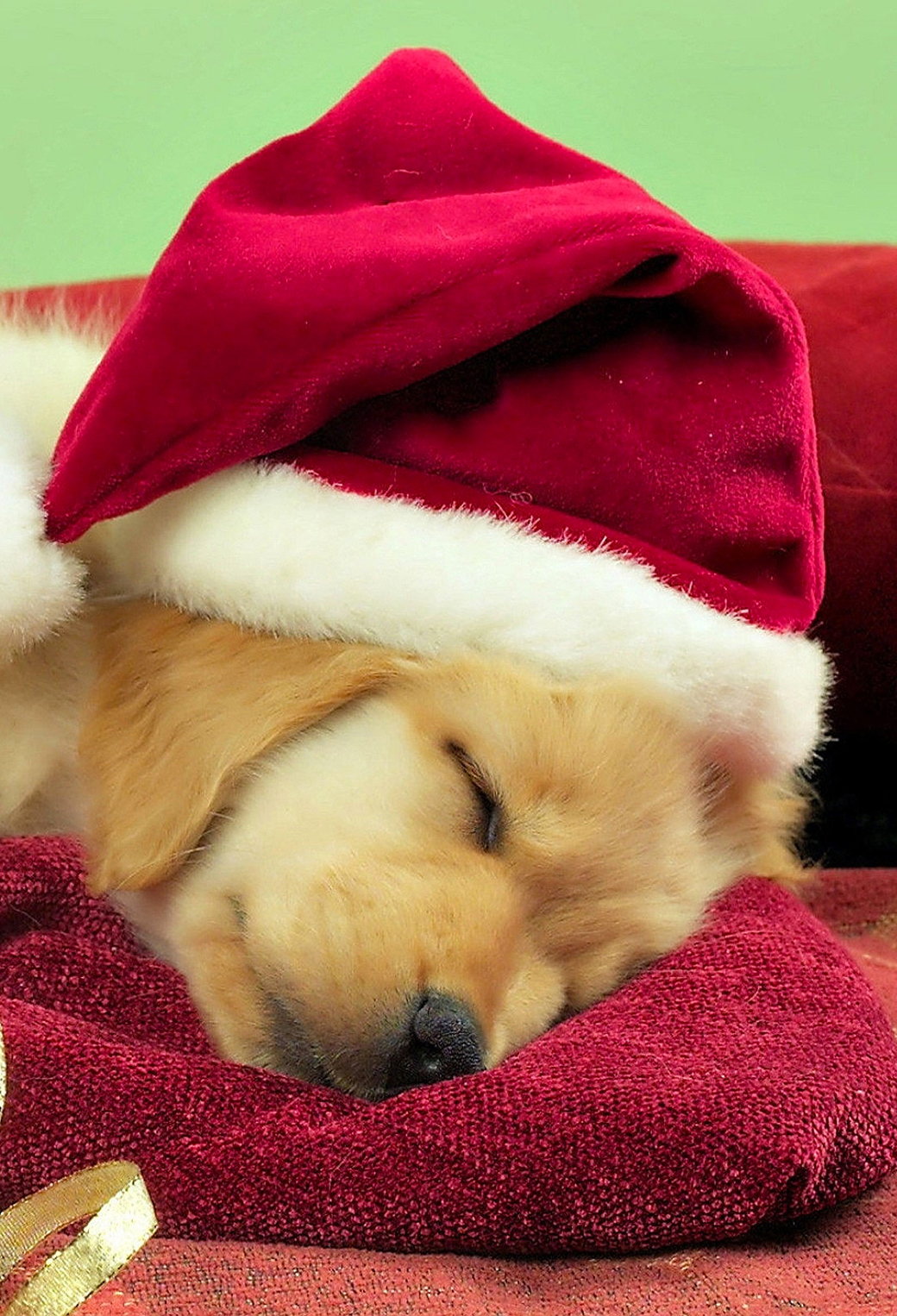 Image result for christmas puppy free images