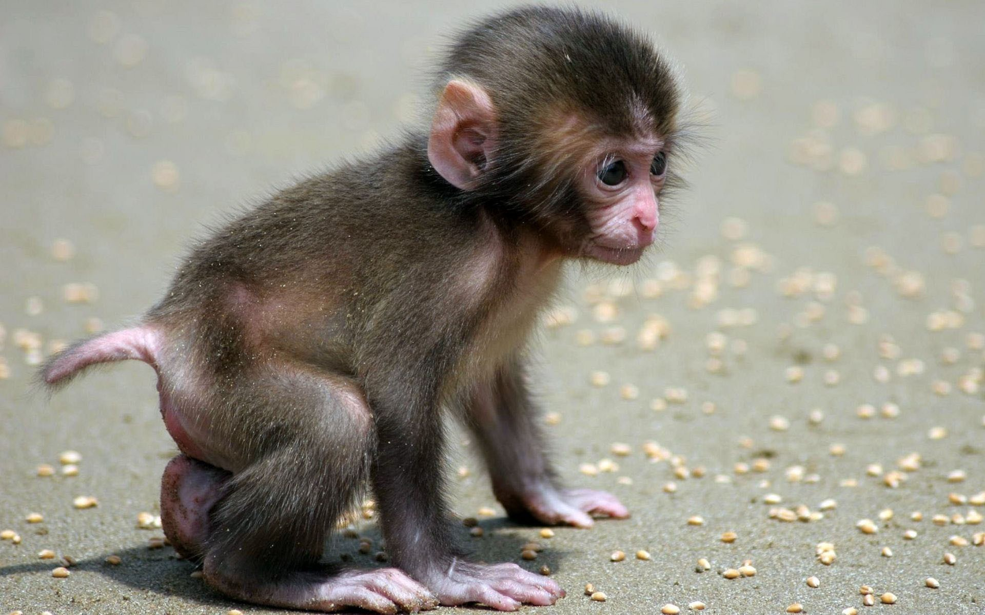 lovely small monkey baby picture download hd wallpapers of animal 1920x1200