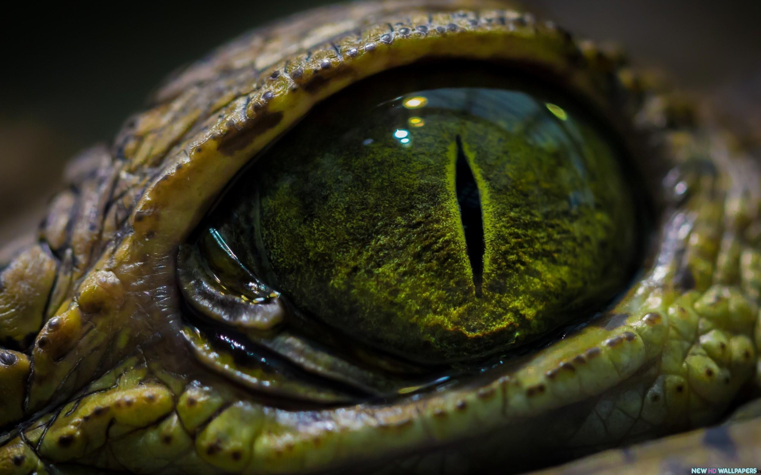 Snake Eyes Wallpaper hd Snake Eye Animal hd Wallpaper 2560x1600