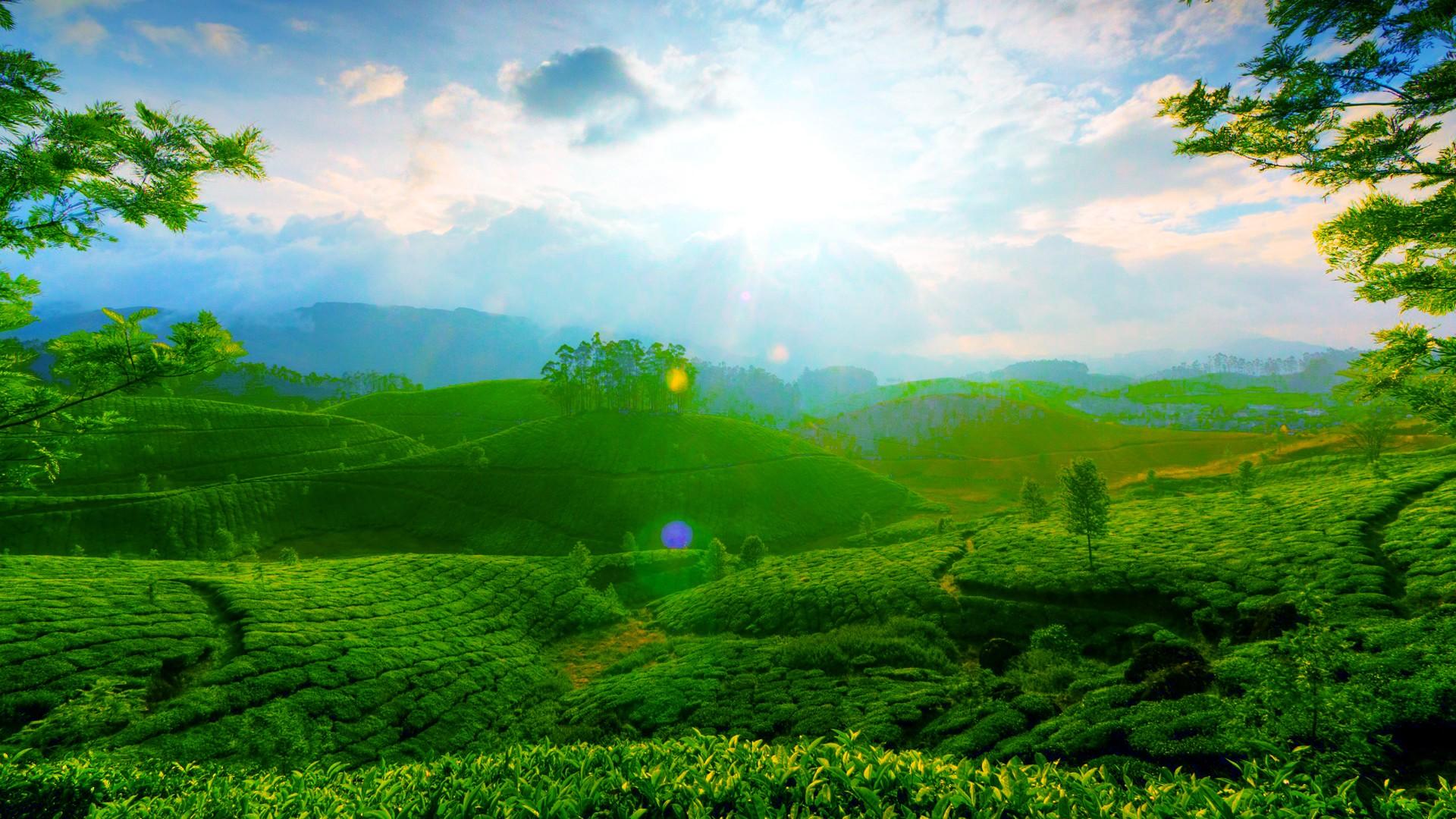Beautiful Green Landscape Wallpaper 1920x1080
