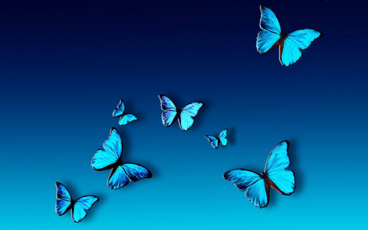 Blue Butterfly Hd Wallpaper Full HD Wallpapers   Clip Art 1280x800