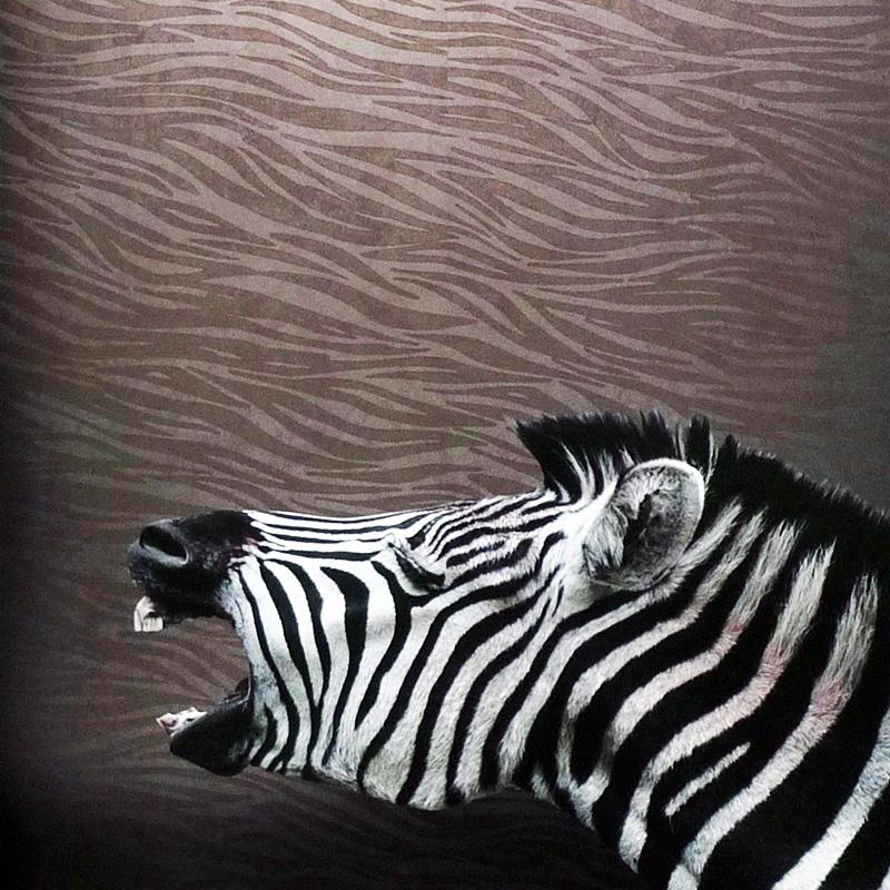 46+] Zebra Print Wallpaper for Bedrooms on WallpaperSafari