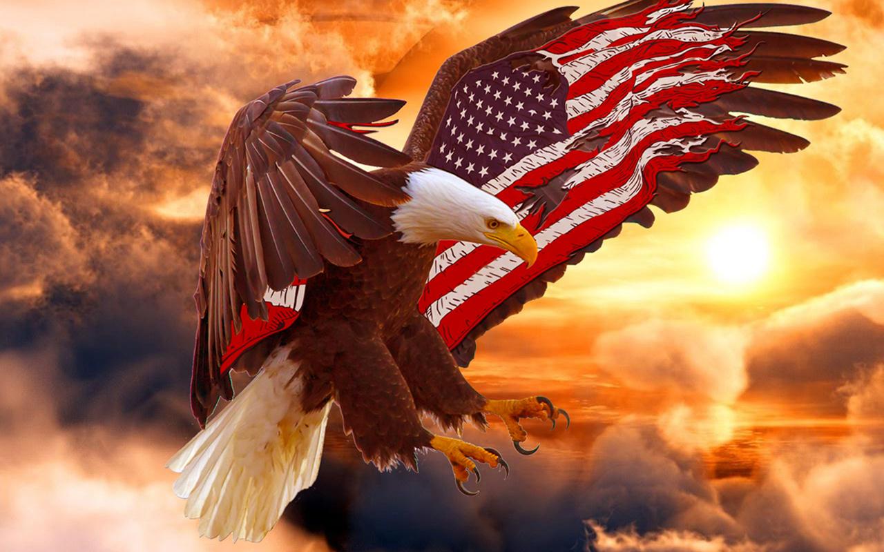 Bald Eagle Wallpaper 24   1280 X 800 stmednet 1280x800