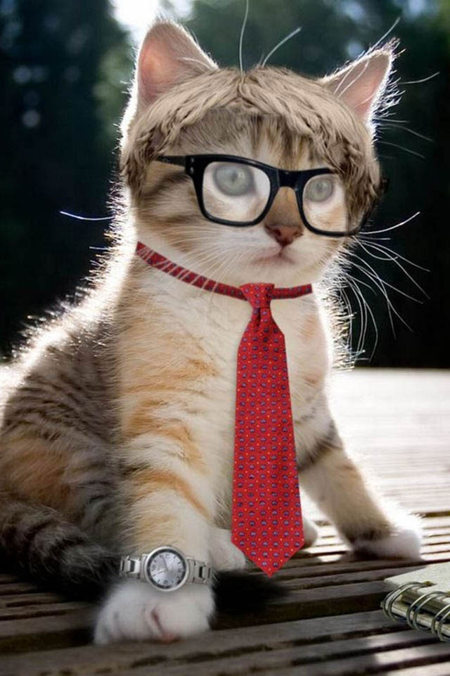 Wearing Glasses Cat IPhone Wallpaper IPod Touch Wallpapers 640x960