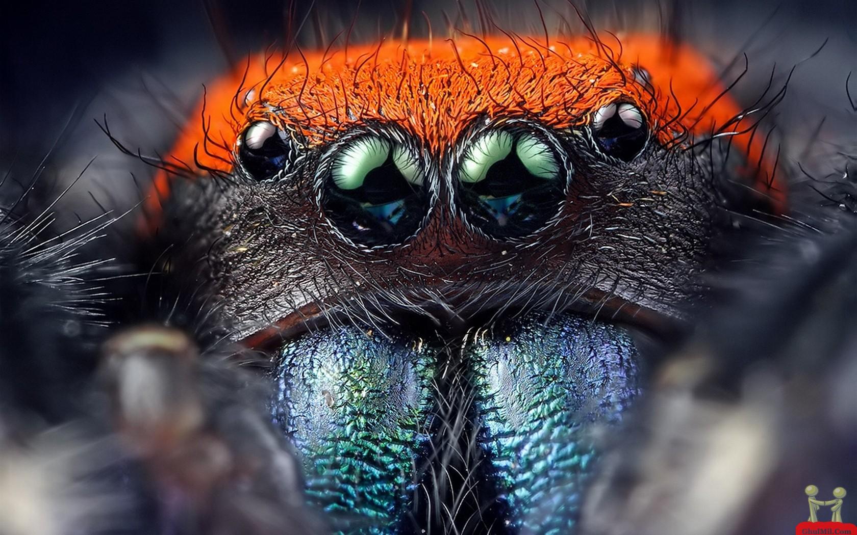 HD Spider Wallpaper - WallpaperSafari