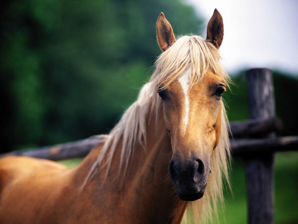 Free Download Pics Photos Download Horse Wallpapers Backgrounds