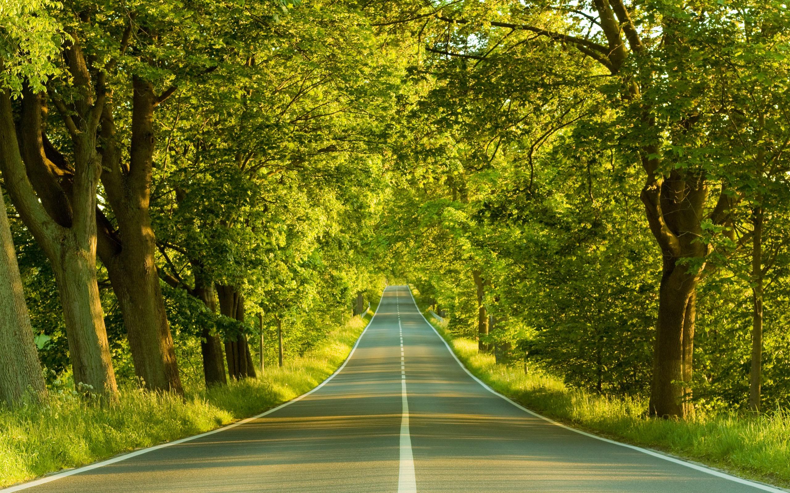 My Summer Love Road desktop wallpapers 800x600 My Summer Love Road 2560x1600