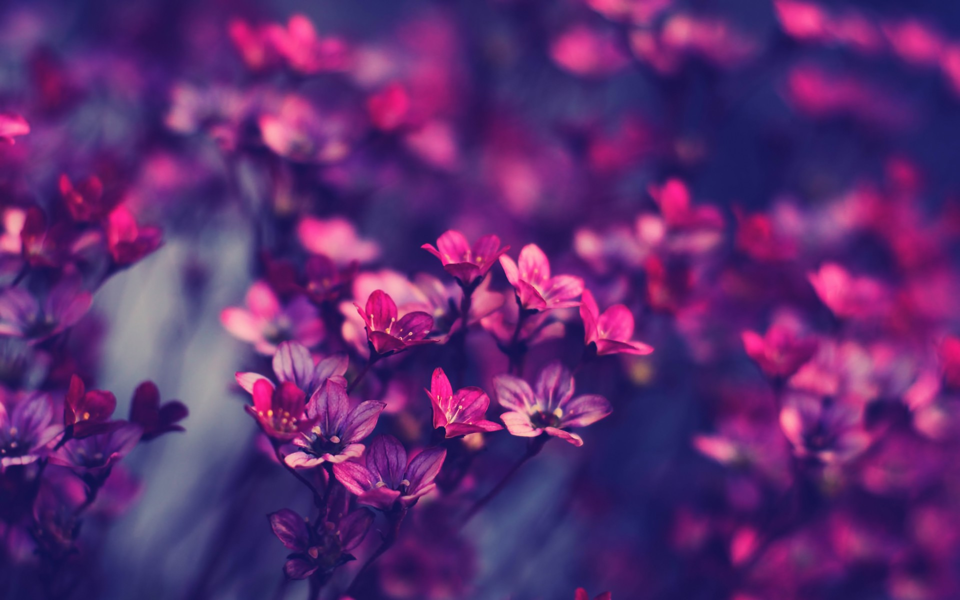 Flower Aesthetic Photography Desktop Wallpaper
