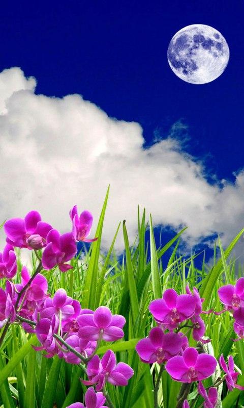 3D flowers HD Live Wallpaper screenshot