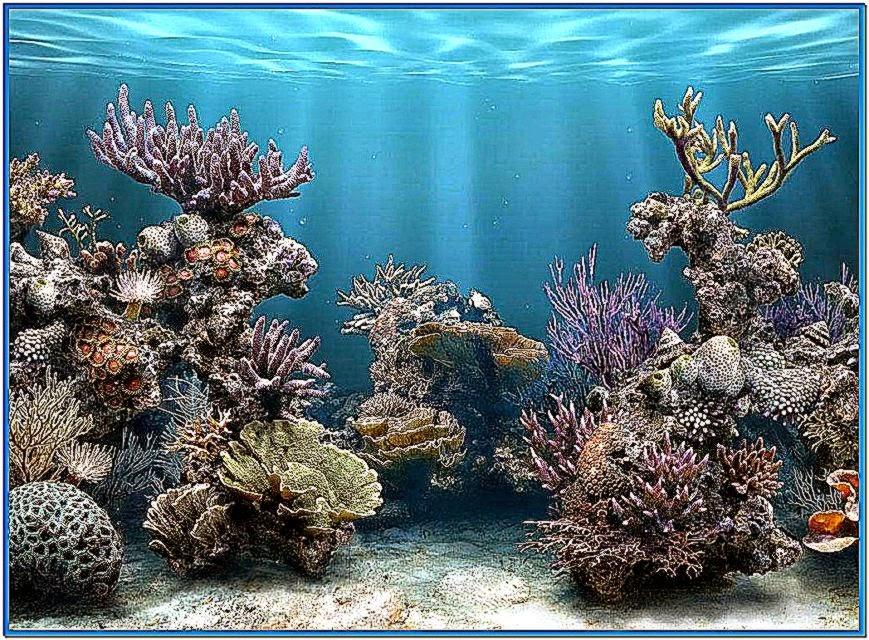 3D Aquarium Screensaver Wallpaper Best HD Wallpaper 869x640