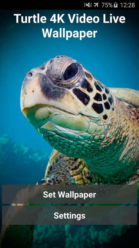 Turtle 4K Video Live Wallpaper Gratis Turtle 4K Video Live Wallpaper 576x1024