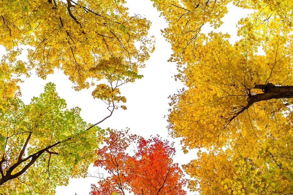 Fall and Autumn Wallpapers 100 best wallpaper autumn 1000x664