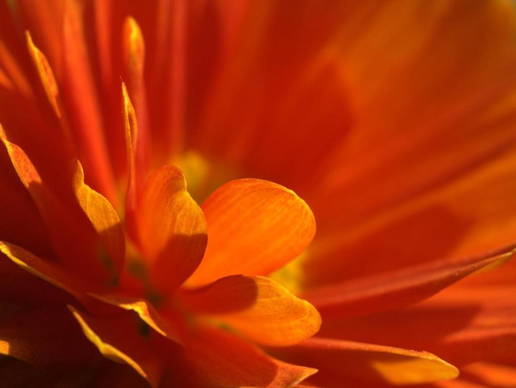 orange flower wallpaper 1024x770