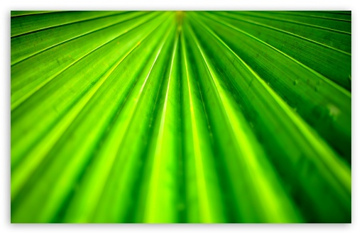 Tropical Leaf HD wallpaper for Standard 43 54 Fullscreen UXGA XGA 510x330