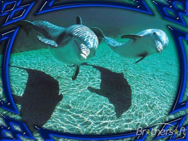 Download Dolphins Underwater Animated Screensaver Dolphins 612x459