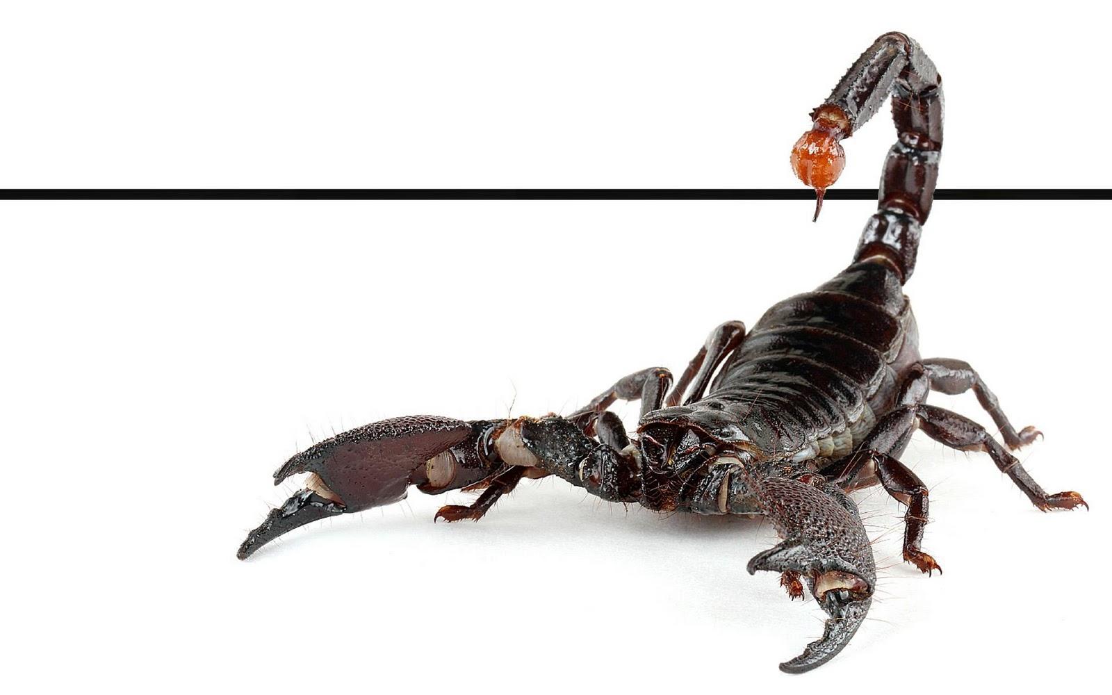 Best Wallpapers Scorpions Wallpapers 1600x1000