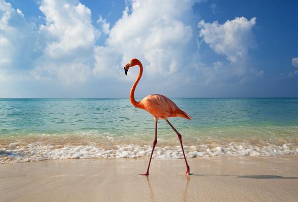 Wallpaper wave ocean flamingo sun bayahibe dominican republic 590x400