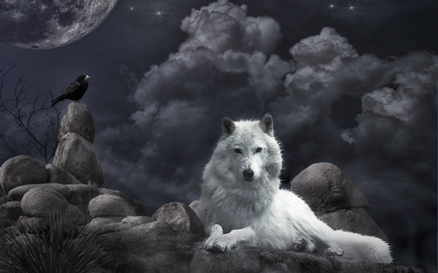 Wallpaper White Wolf and raven in the night 1440x900 Wallpapers 3d 1440x900
