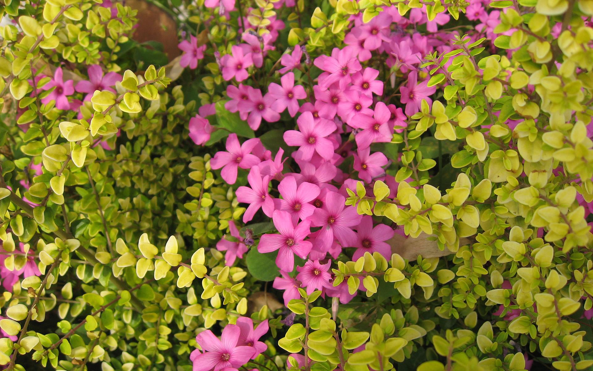 Flower Hd Wallpapers Widescreen wallpaper   40105 1920x1200