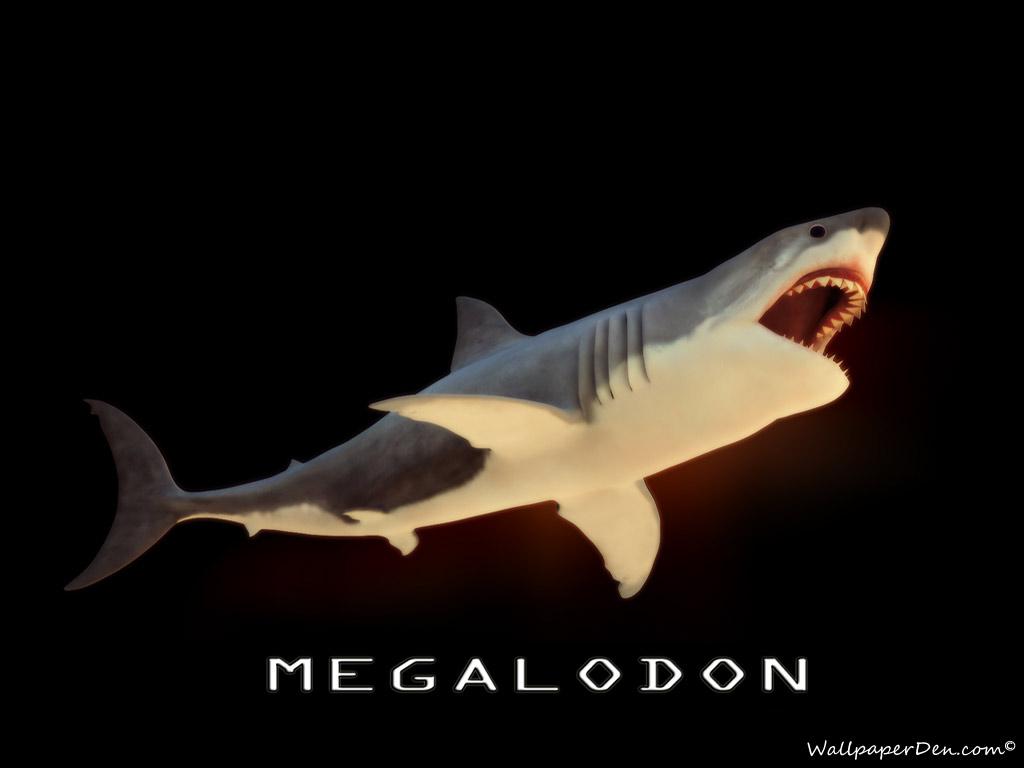 Megalodon wallpaper