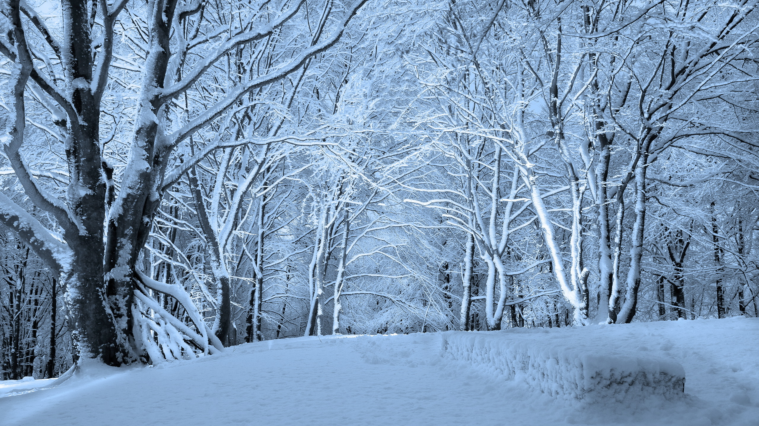 Free Download Wallpaper Winter Forest Hd Wallpaper