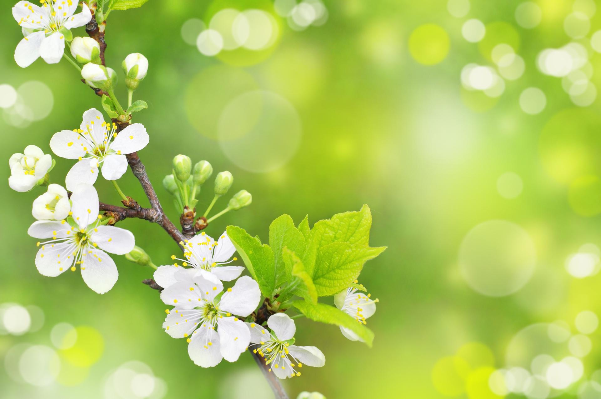 Free Spring Wallpaper For Desktop WallpaperSafari
