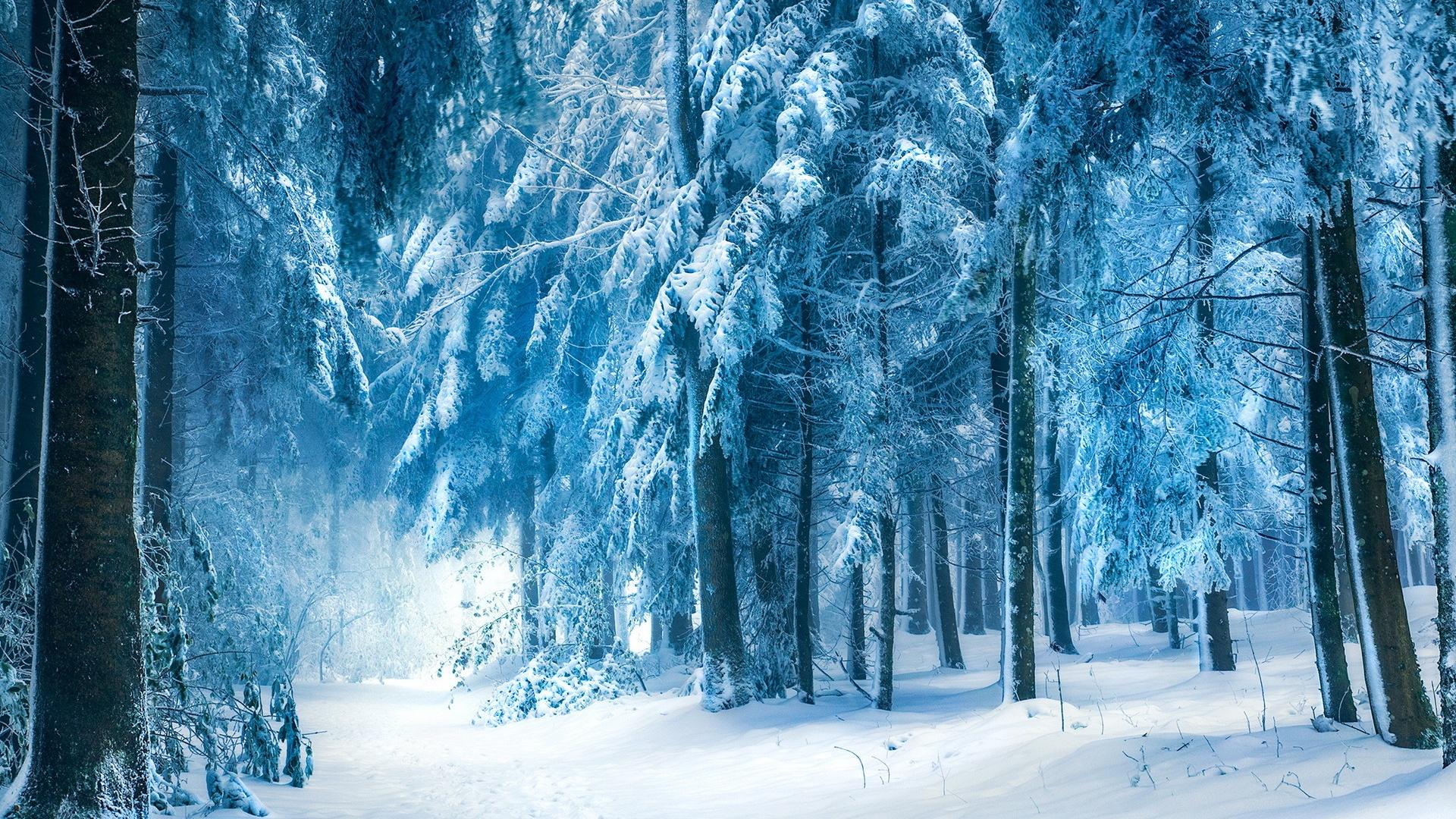 Winter Landscape Snow Forest HD Wallpaper 1920x1080