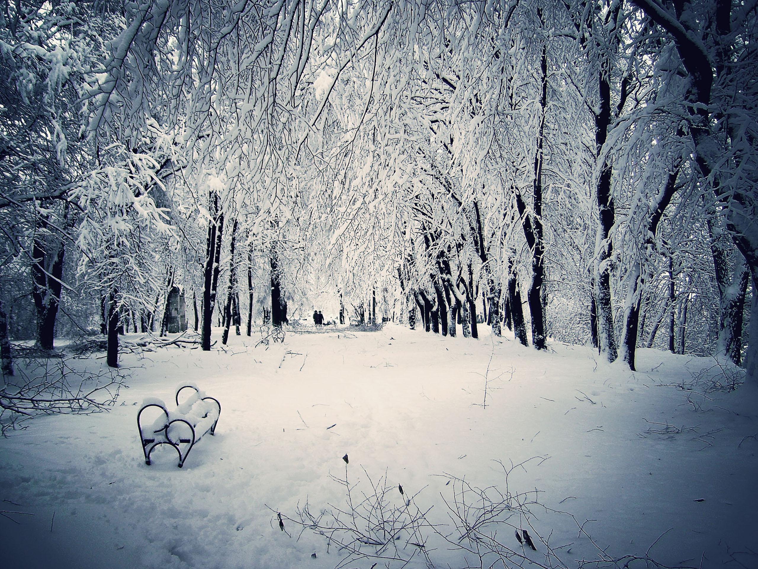 winter snow scenes wallpaper 2015   Grasscloth Wallpaper 2560x1920