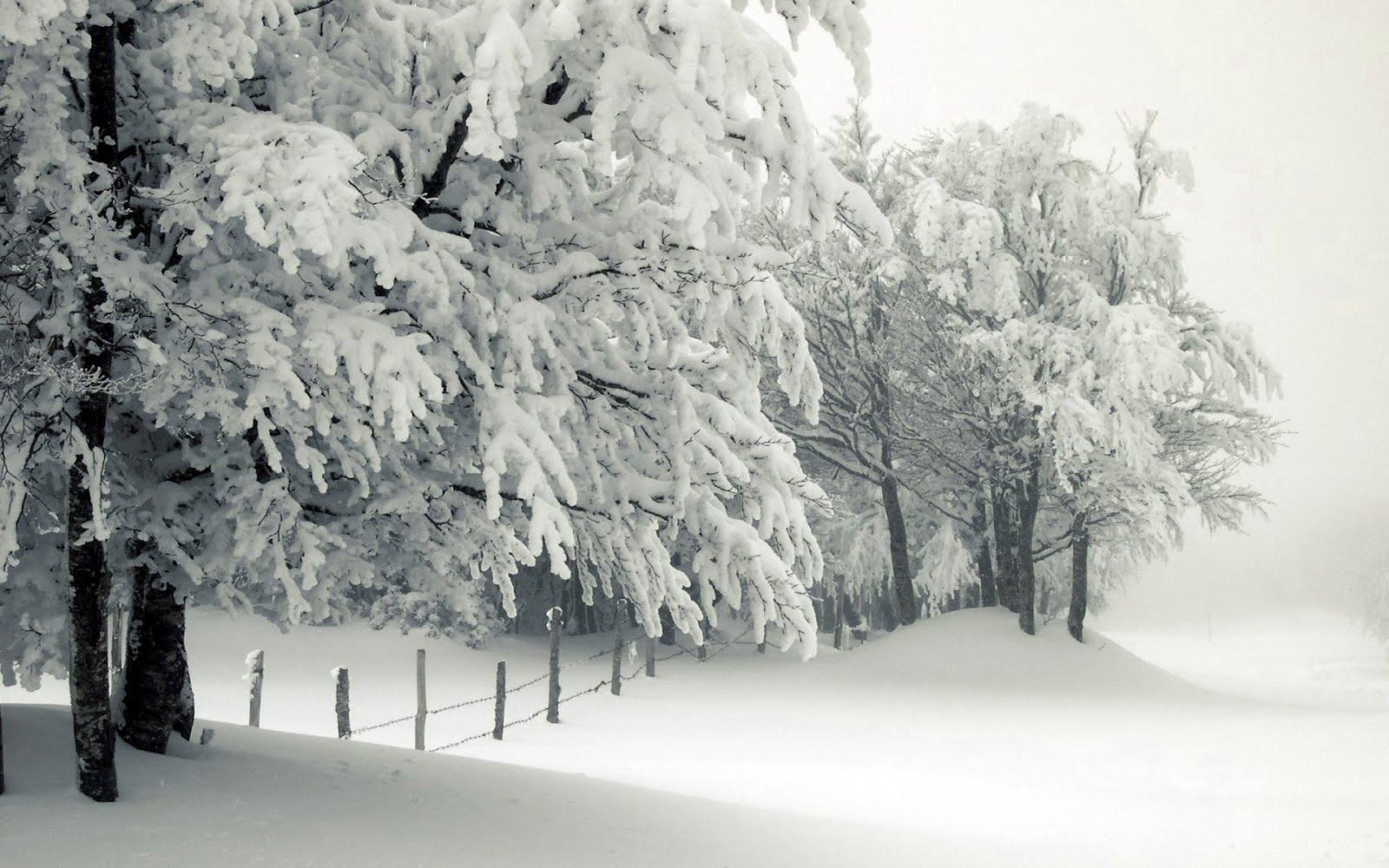 Snow scene trees 1600x1000