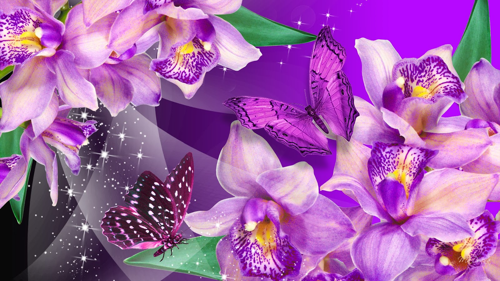 Pics Photos   Purple Orchid Flowers For Desktop 1600x900