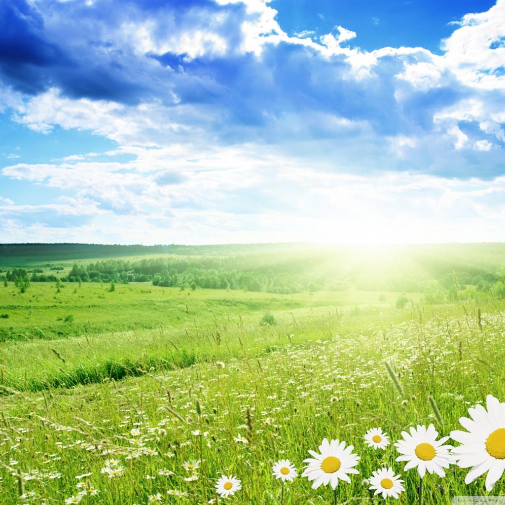 Clear Sky Grasslands Ipad Backgrounds Widescreen and HD background ...