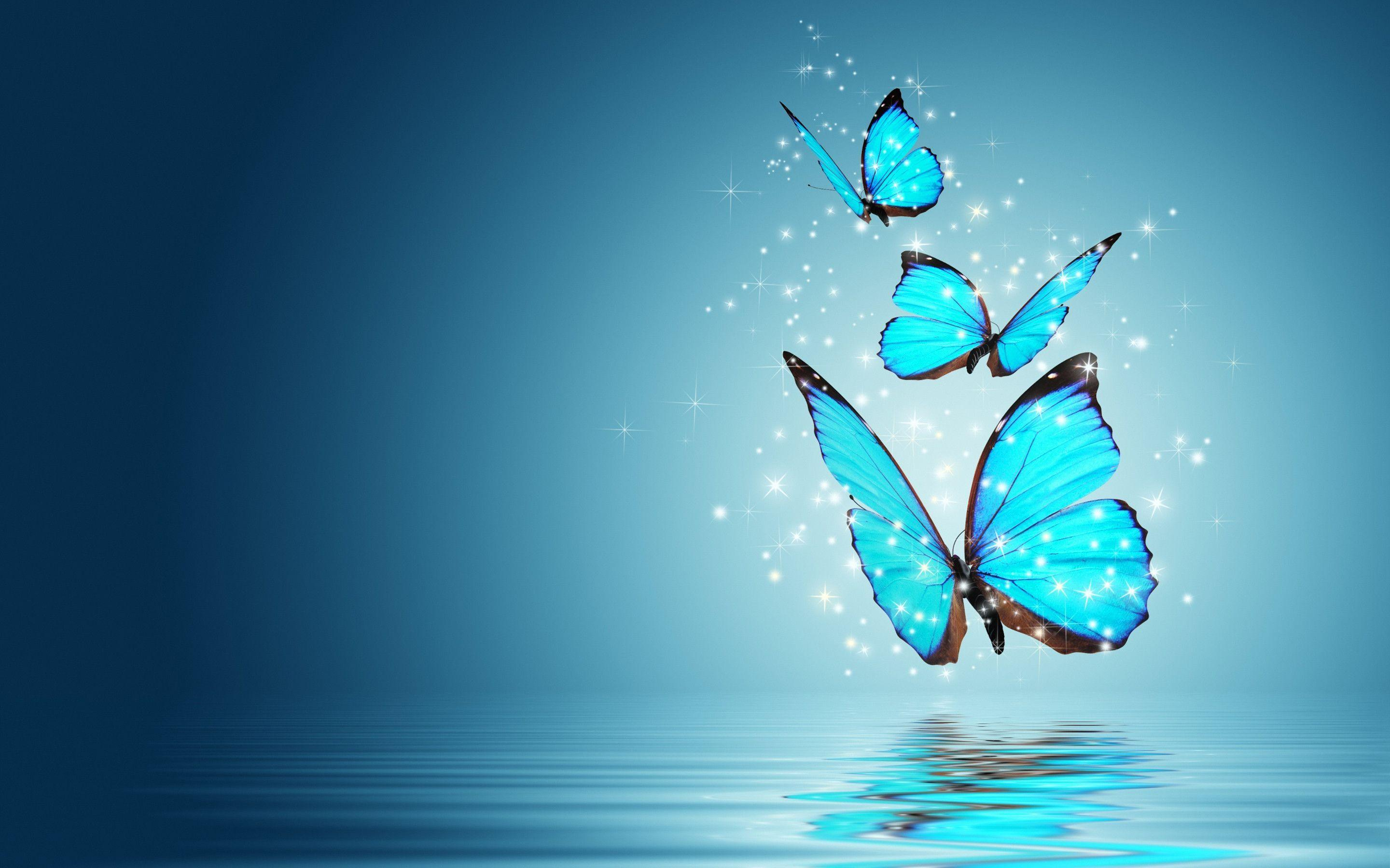 7538 blue butterfly hd wallpaper 2880x1800