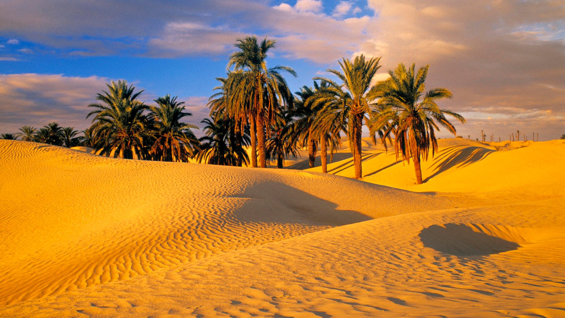 Desert Oasis Wallpaper - WallpaperSafari