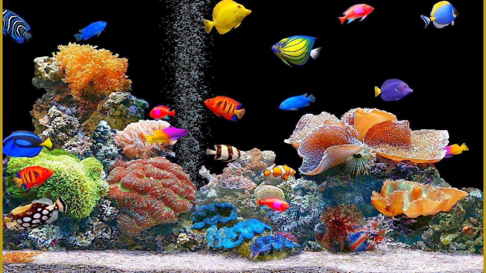 Animated Fish Tank Wallpaper Wallpaper Animated Aquarium live 1600x900