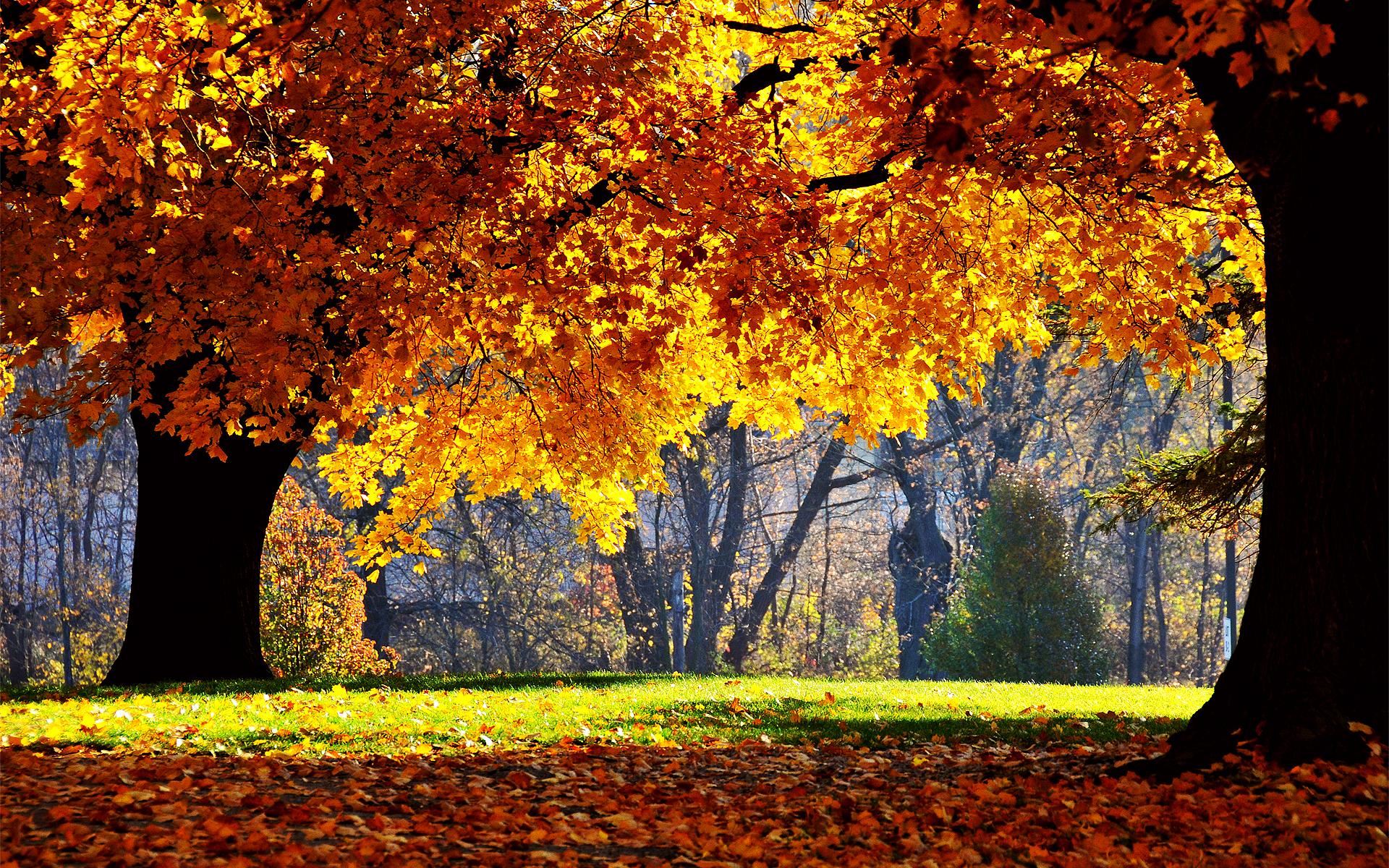 Autumn Farm Desktop Wallpaper   Viewing Gallery 1920x1200
