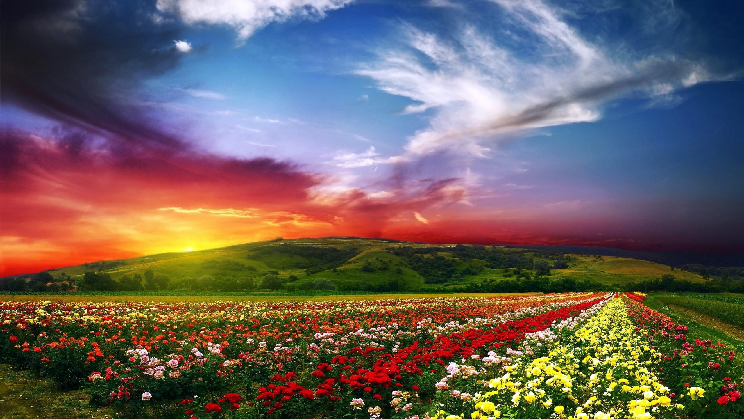 Paradise Wallpaper Hd 244437 2560x1440
