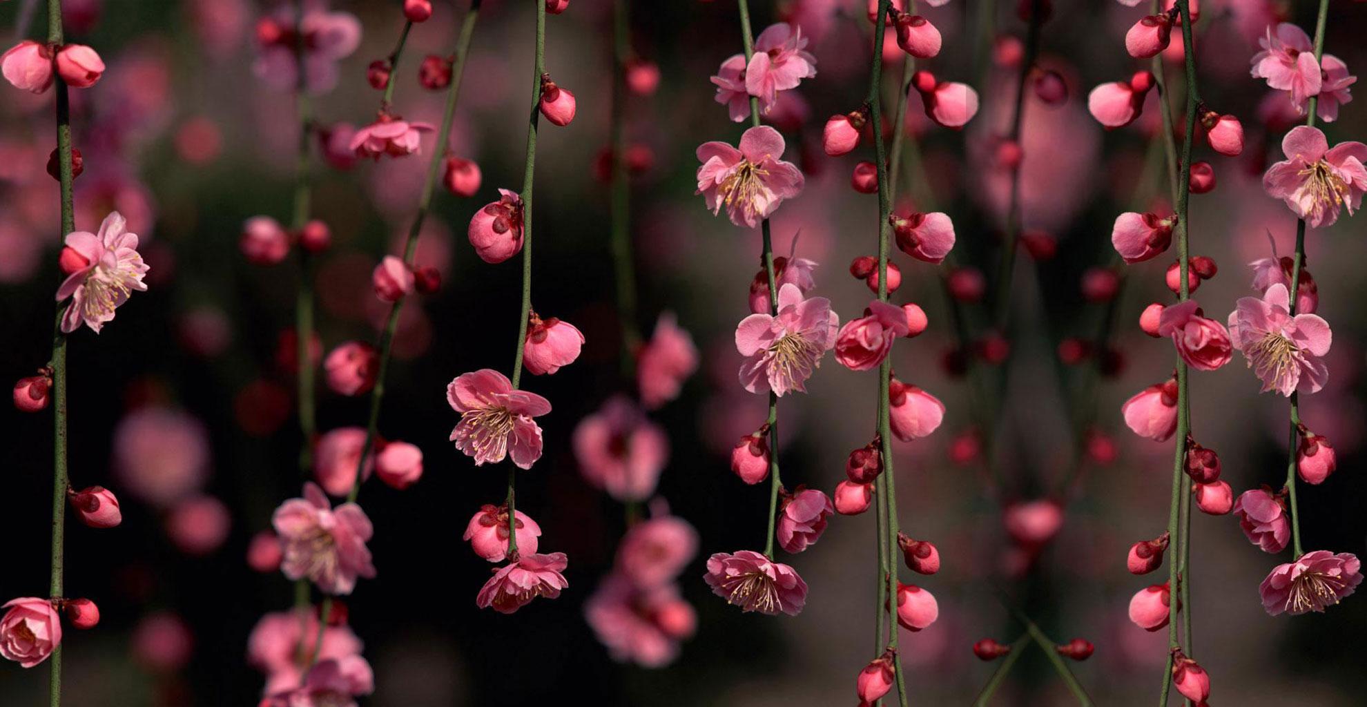 Best 44 Twitter Backgrounds Flowers on HipWallpaper Twitter 1980x1024