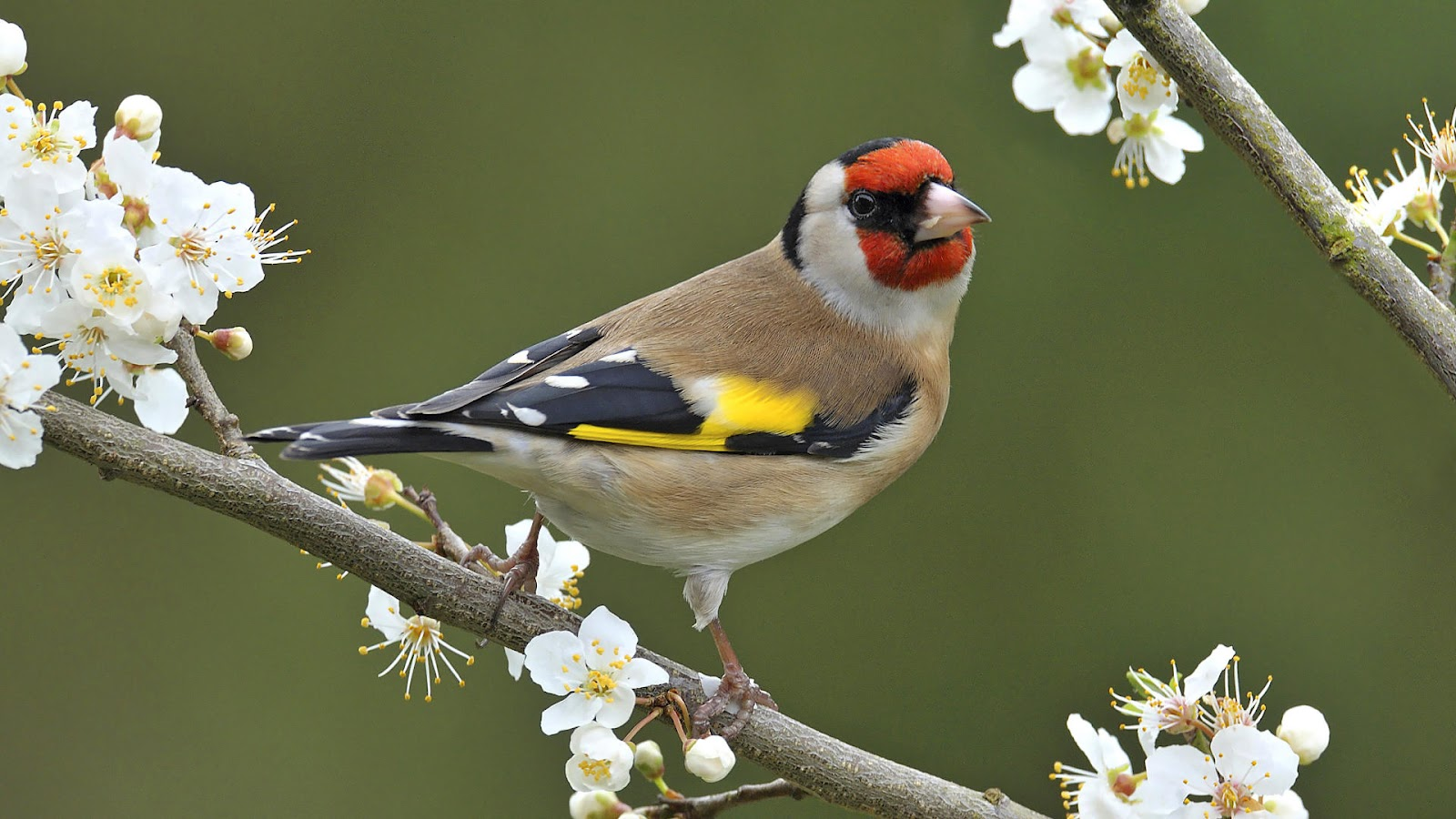 animal wallpaper with a bird sitting on a branch HD birds wallpapers 1600x900