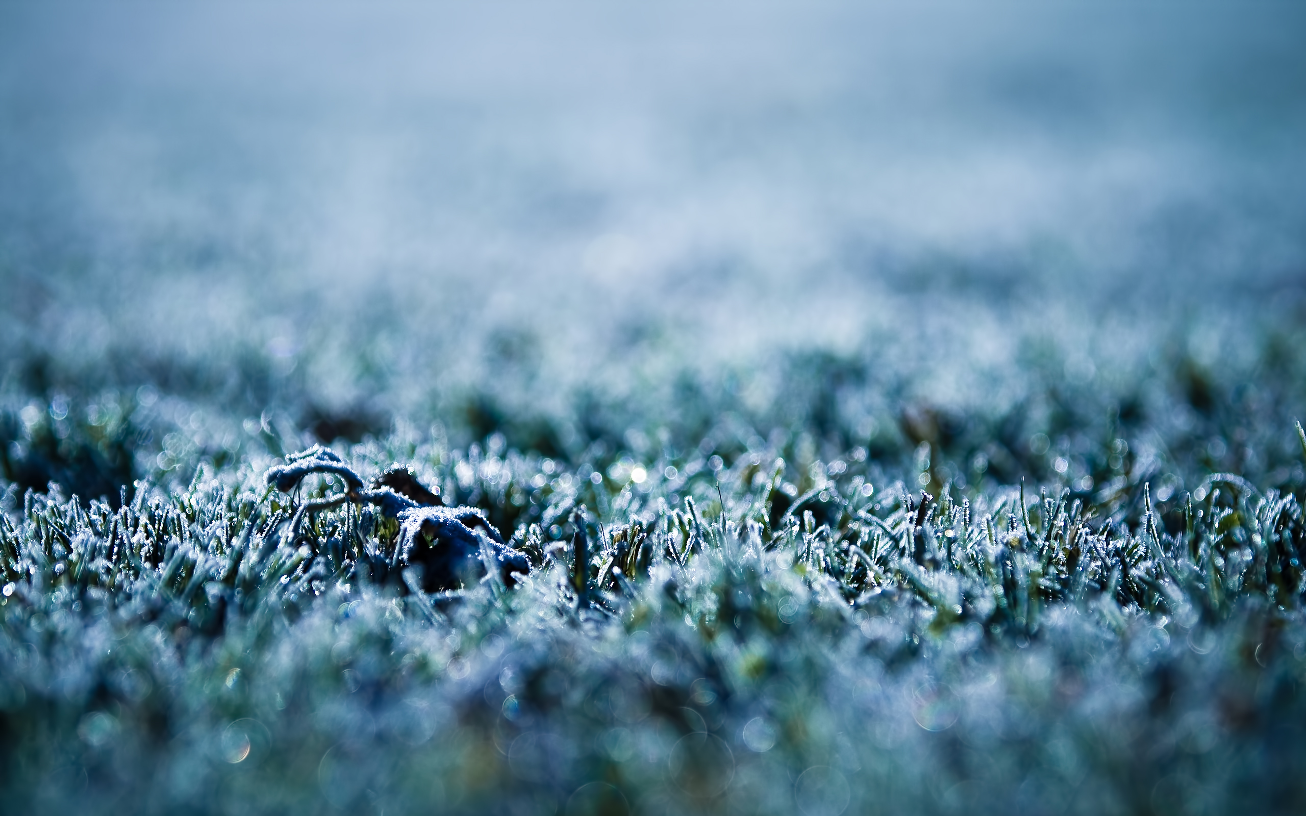 Frost Wallpaper 1 by pavel89l 2560x1600