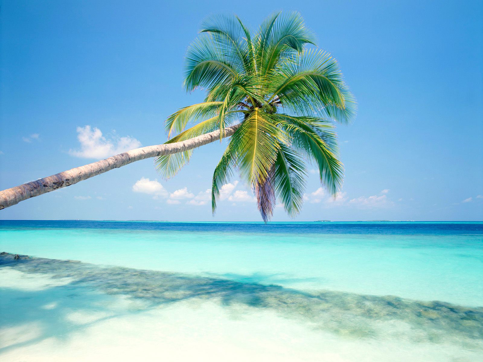 Tropical Beach With Palm Tree computer desktop wallpapers 1600x1200