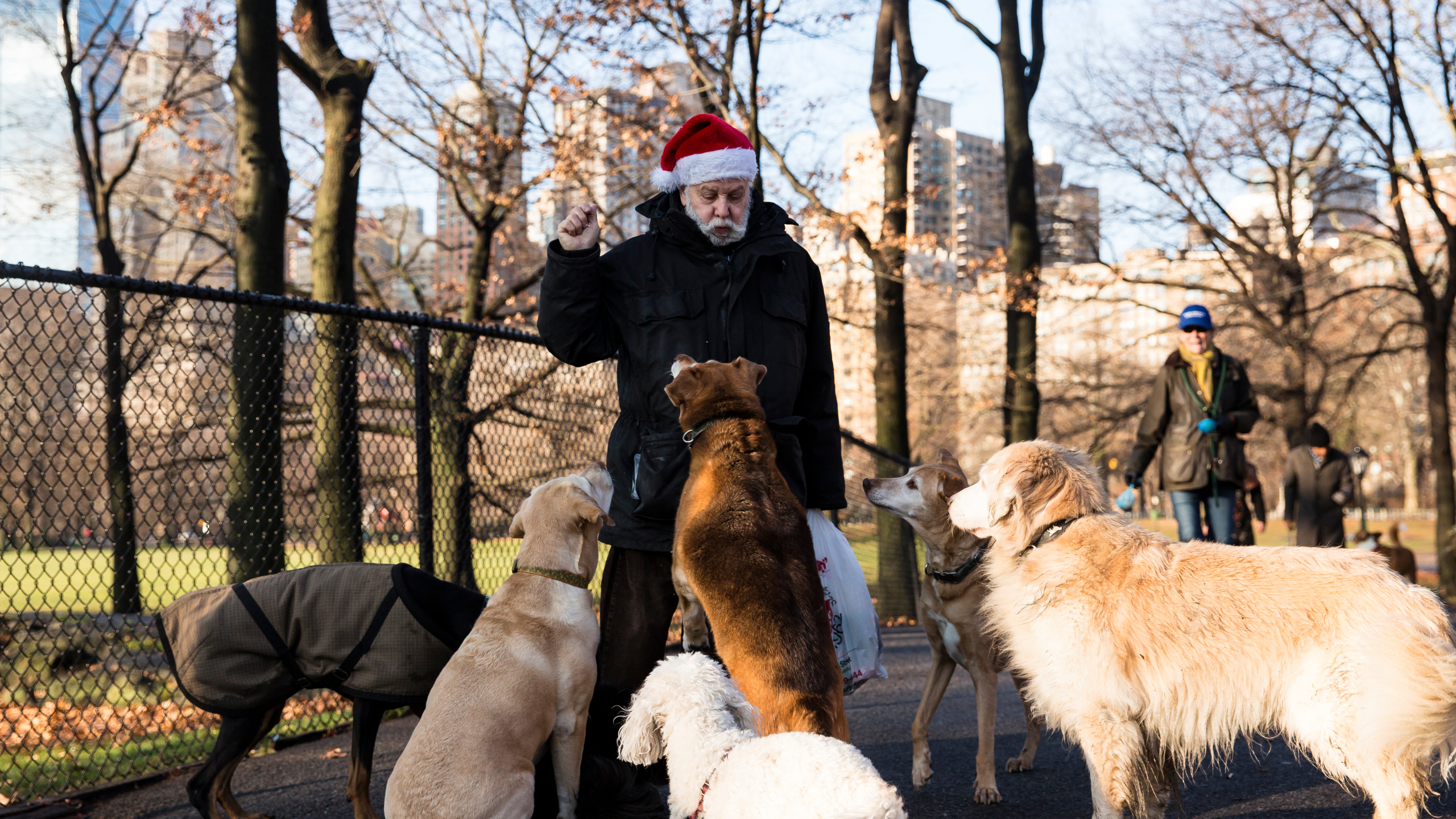 Share your Christmas spirit with homeless fur babies OurQuadCities 2560x1440