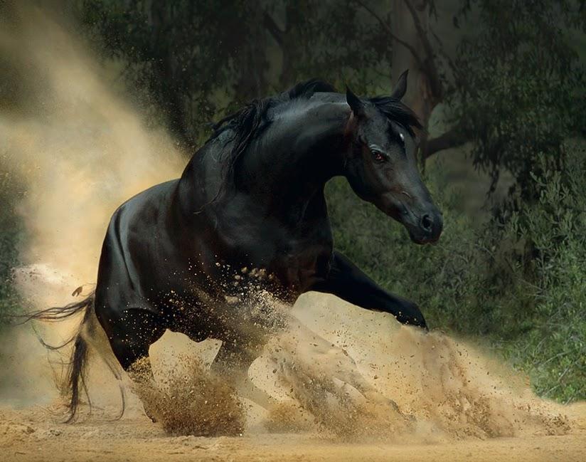 horse wallpaper arabian horse wallpaper beautiful horse wallpaper 824x649