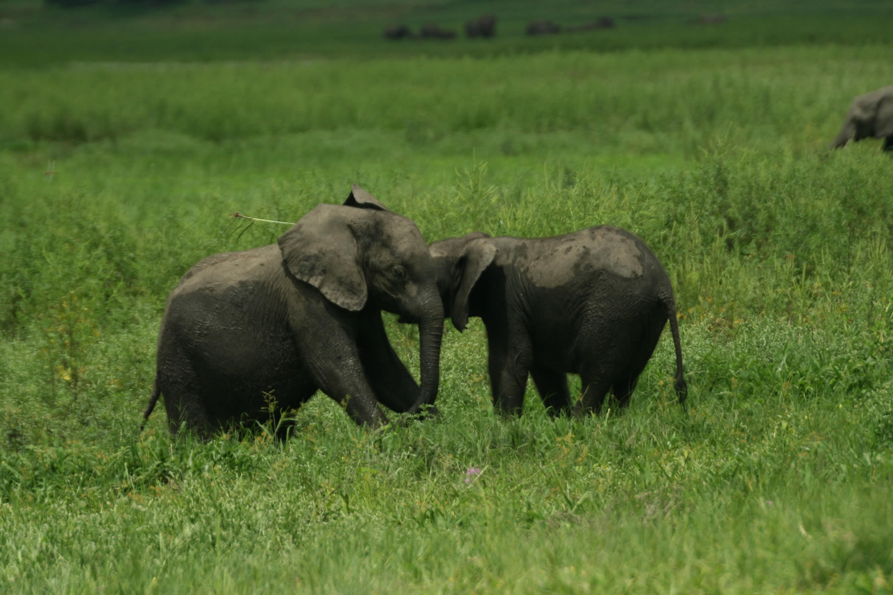 Baby Elephant Wallpapers Cool Digital Photography 1800x1200