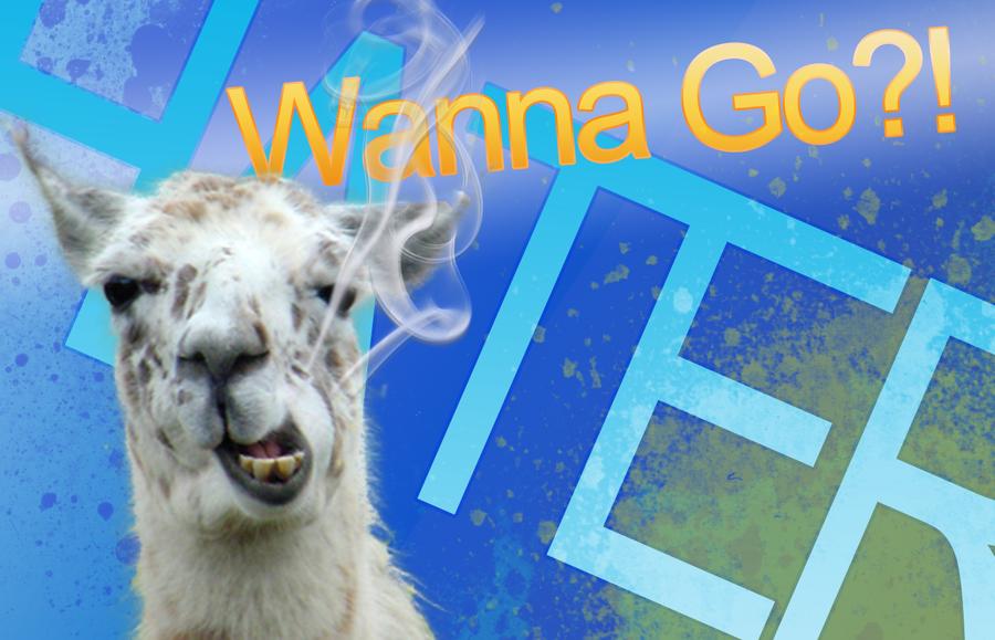 Llama background 24 by loganfayle 900x579