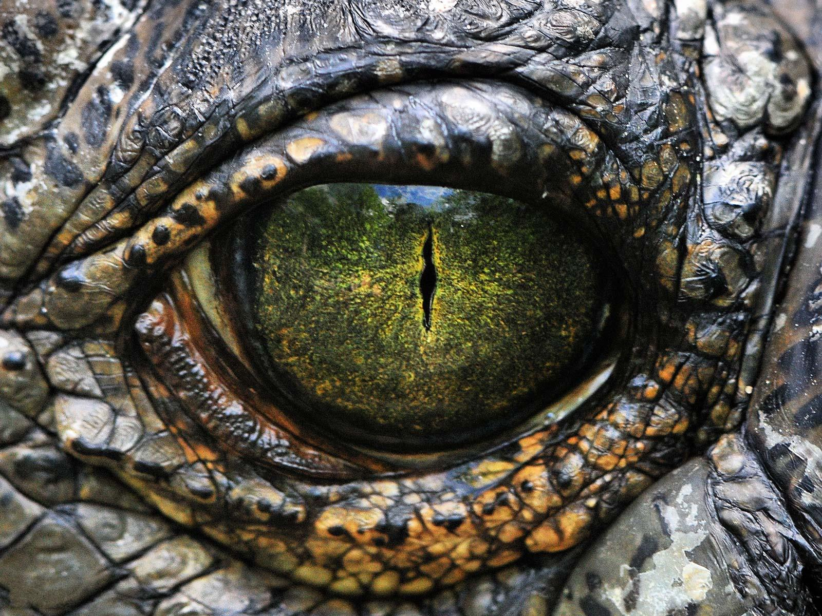Genie Phantom Story Crocodile eyes 1600x1200