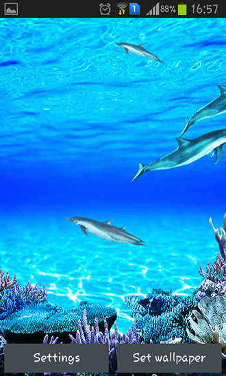 Download Dolphins sounds   livewallpaper for Android Dolphins sounds 330x550