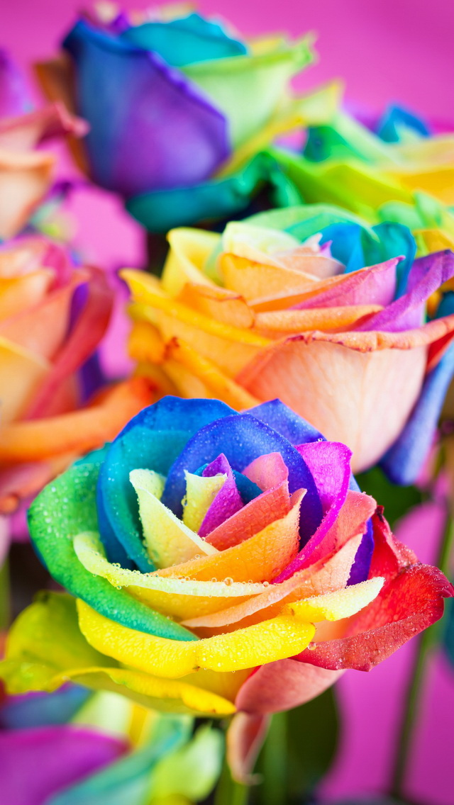 Colorful Roses Wallpaper   iPhone Wallpapers 640x1136