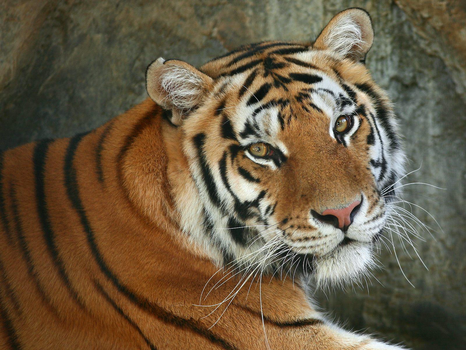 rate select rating give beautiful animal 1 5 give beautiful animal 2 1600x1200