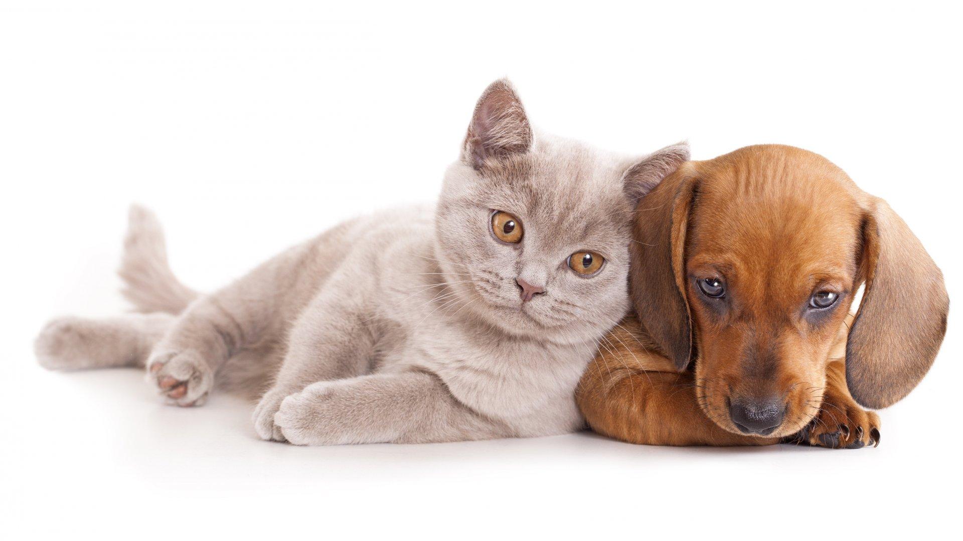 Cute Dog and Cat Wallpaper HD 1920x1080