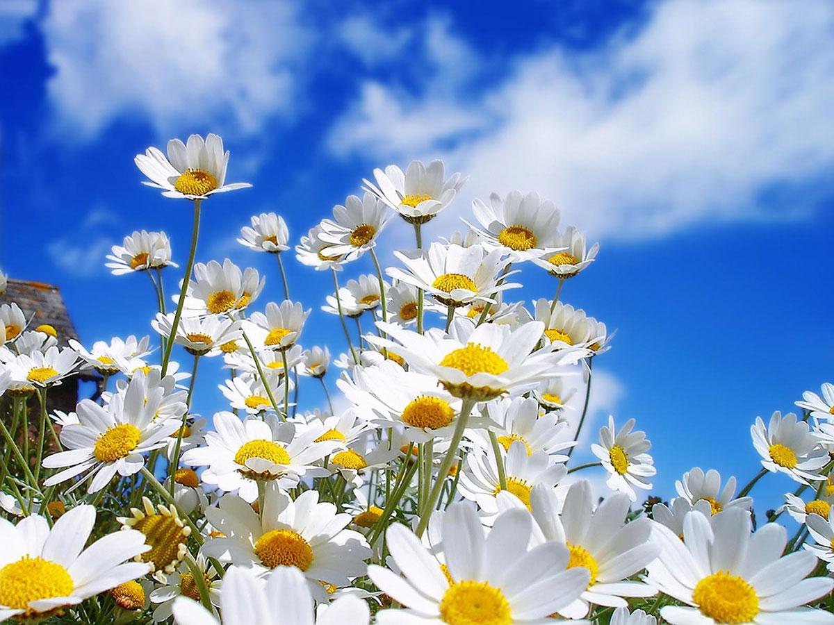 Spring flowers wallpaper 1200x900